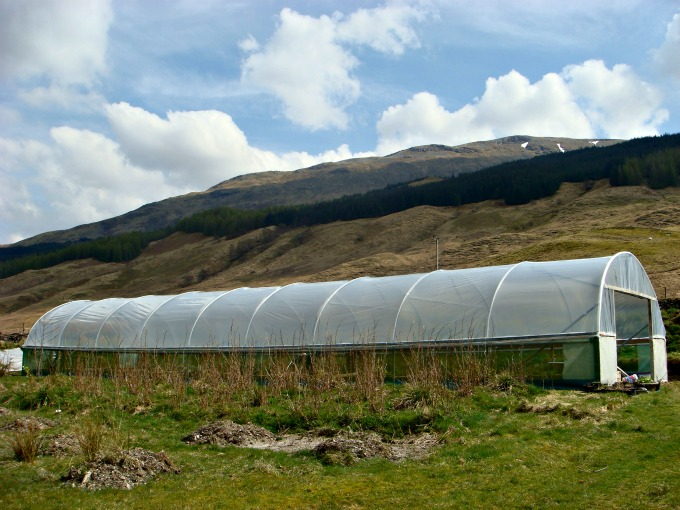 New_Roof_for_Polytunnel.jpg